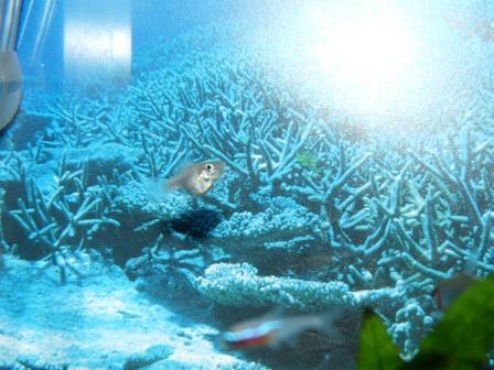 ミックスバルーンモーリー稚魚2